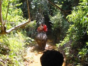 Elefant Trekking på Koh Lanta